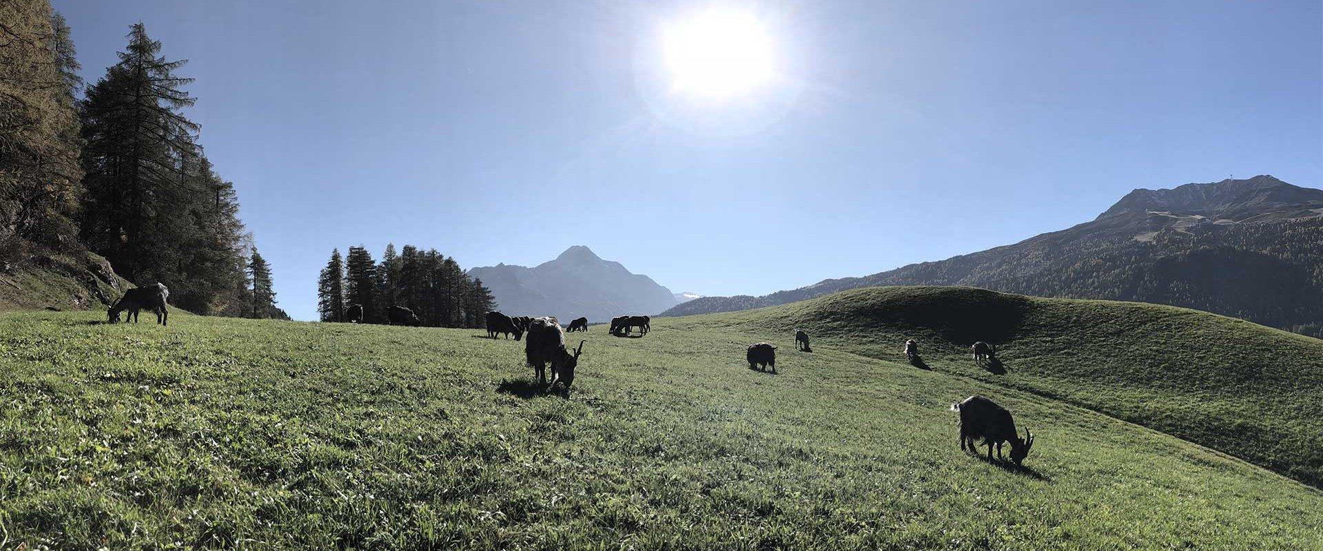 Urlaub am Bauernhof in Sölden im Ötztal